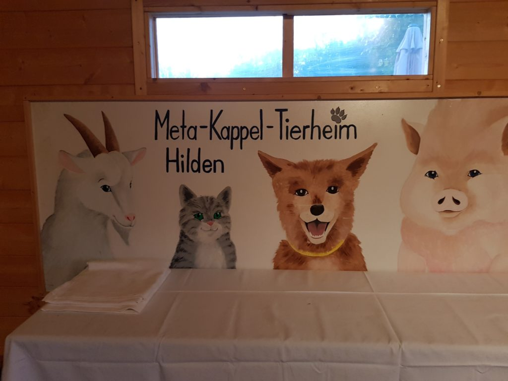 Adventszeit Mit Katze Hund Und Maus