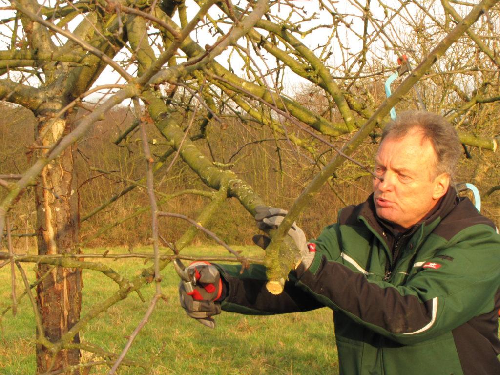"""Obstbaumschnitt """"Am Anfang gehört viel Ausprobieren dazu"""""""